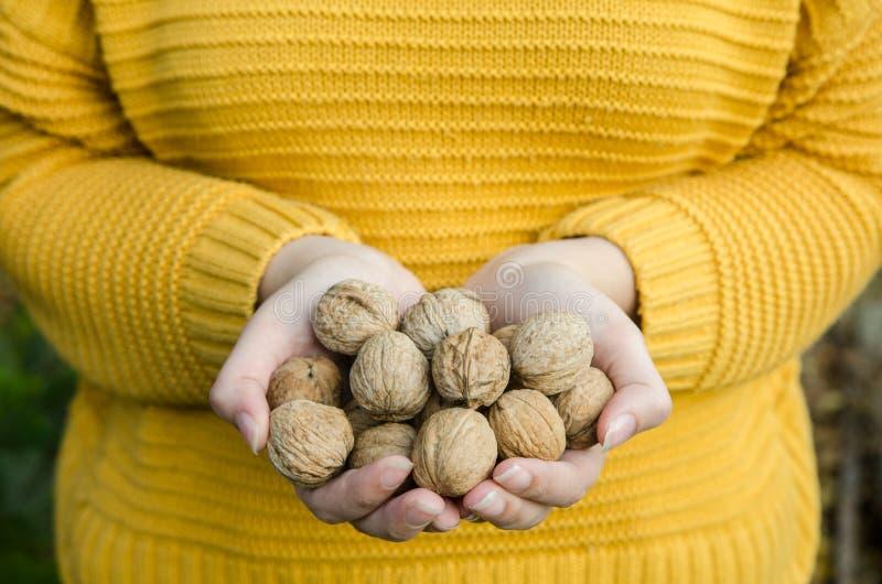 Muchacha que se sostiene en sus nueces de las manos - imagen de la forma de vida del otoño fotos de archivo libres de regalías