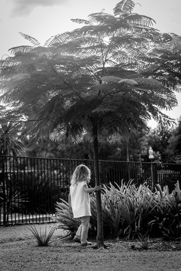 Muchacha que sostiene el árbol imágenes de archivo libres de regalías