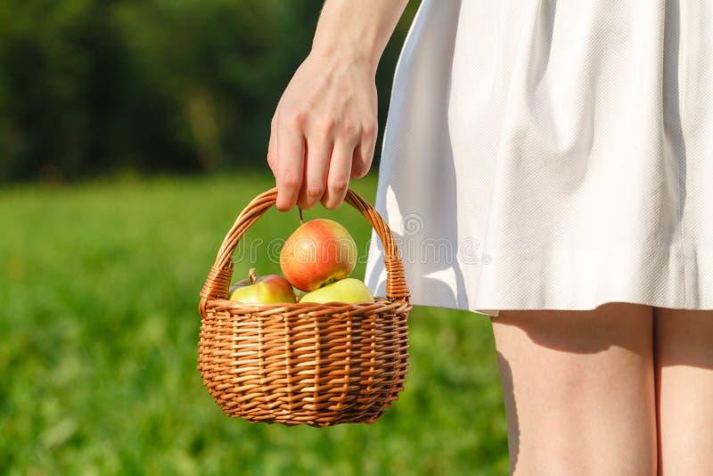 Muchacha que sostiene la cesta de manzanas foto de archivo