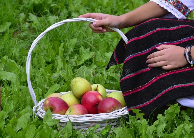 Muchacha que sostiene manzanas cosechadas frescas en una cesta fotos de archivo