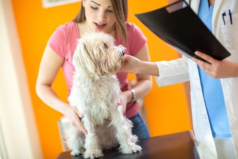 Muchacha que sostiene su perro blanco durante el examen imagen de archivo