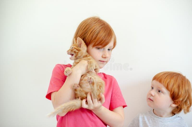 Muchacha que sostiene un gatito del jengibre imagen de archivo
