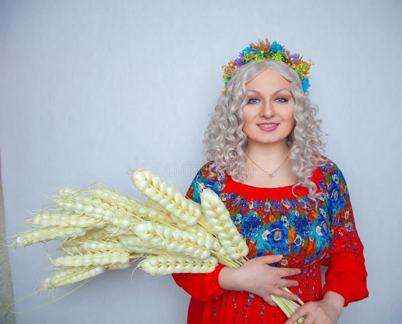 Muchacha regordeta linda del pueblo en sundress rojos de un verano con una gavilla de trigo en sus manos en fondo sólido del estu imagen de archivo