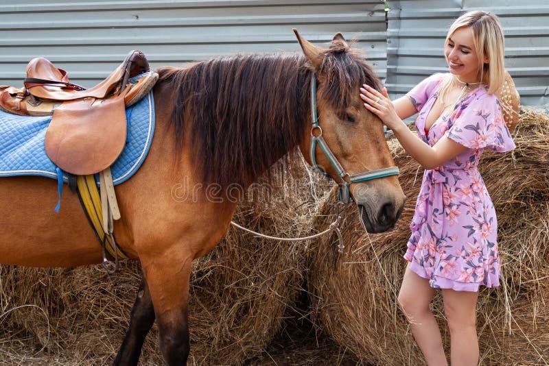 Muchacha rubia joven en el vestido que frota ligeramente un caballo antes de un paseo que come el heno cerca del pajar en un día  fotos de archivo