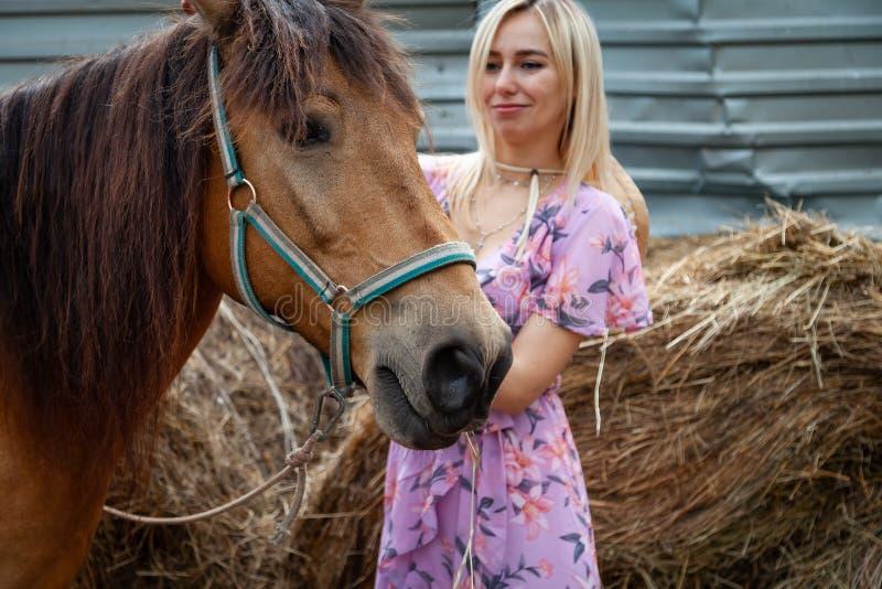 Muchacha rubia joven que frota ligeramente un caballo antes de un paseo que come el heno cerca del pajar en un día claro del vera foto de archivo