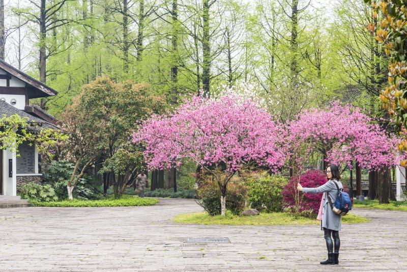muchacha y el flor del melocotón imagen de archivo
