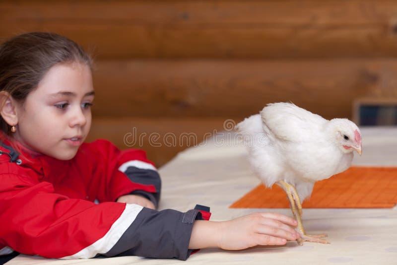 Muchacha y gallina joven fotografía de archivo