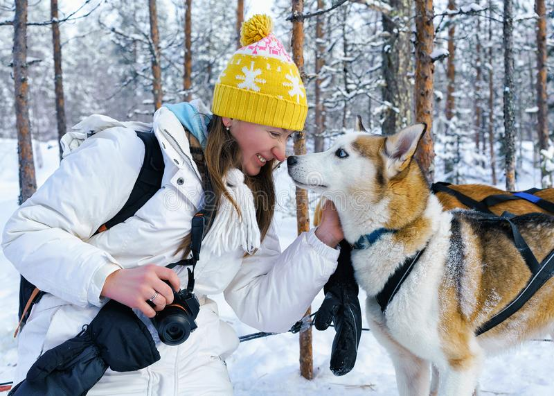 Muchacha y perro fornido en Laponia Finlandia fotografía de archivo libre de regalías
