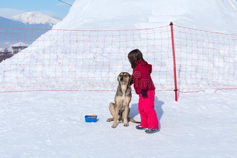 Muchacha y perro sin hogar en invierno fotografía de archivo libre de regalías