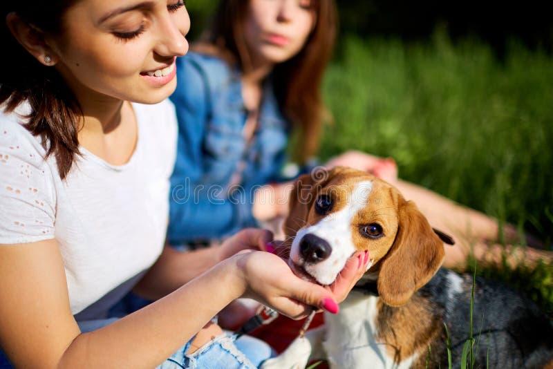 Muchachas felices con su beagle del perro que se sienta en la hierba en verde imagen de archivo