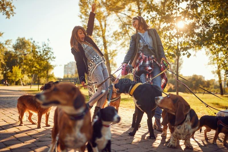 Muchachas que gozan con los perros mientras que camina al aire libre imagenes de archivo