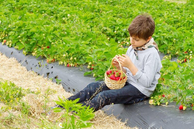 Muchacho con la cosecha de fresas en una cesta fotografía de archivo