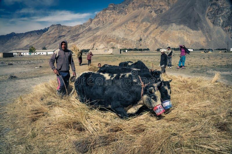 Muchacho en heno en Tayikistán imagen de archivo