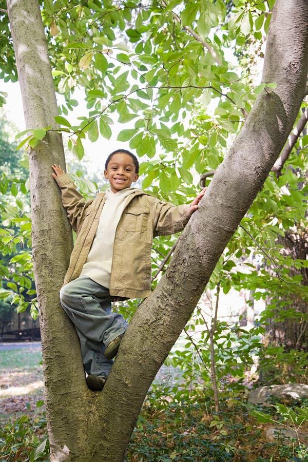 Muchacho en un árbol foto de archivo