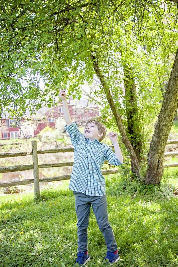 Muchacho fuera de alcanzar hasta árbol del tacto fotografía de archivo libre de regalías