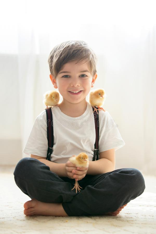 Muchacho hermoso joven del prechool, jugando con el pequeño polluelo recién nacido foto de archivo libre de regalías