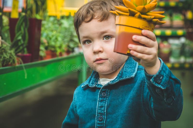 Muchacho hermoso que juega con los succulents de la planta en la tienda al por menor El cultivar un huerto en invernadero imagenes de archivo