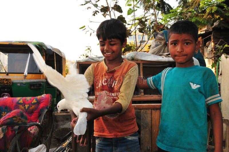 Muchacho indio que sostiene la paloma en la Ahmadabad-ciudad, Gujarat imagenes de archivo