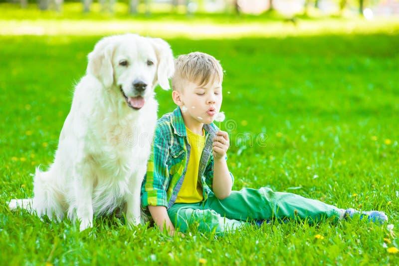 Muchacho joven con el perro del golden retriever que se sienta en hierba verde y el diente de león que sopla foto de archivo libre de regalías