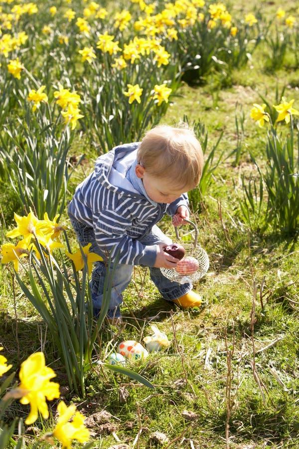 Muchacho joven en caza del huevo de Pascua en campo del narciso foto de archivo
