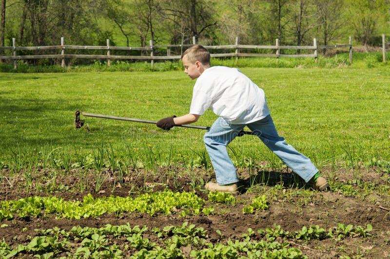 Muchacho joven que trabaja en jardín con la azada fotografía de archivo