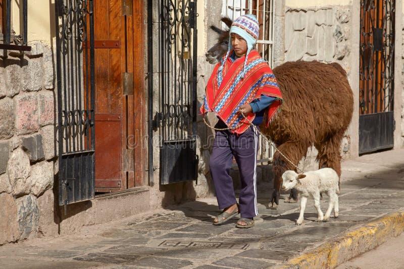Muchacho peruano que camina con los lamas en la calle de Cuzco Perú foto de archivo libre de regalías