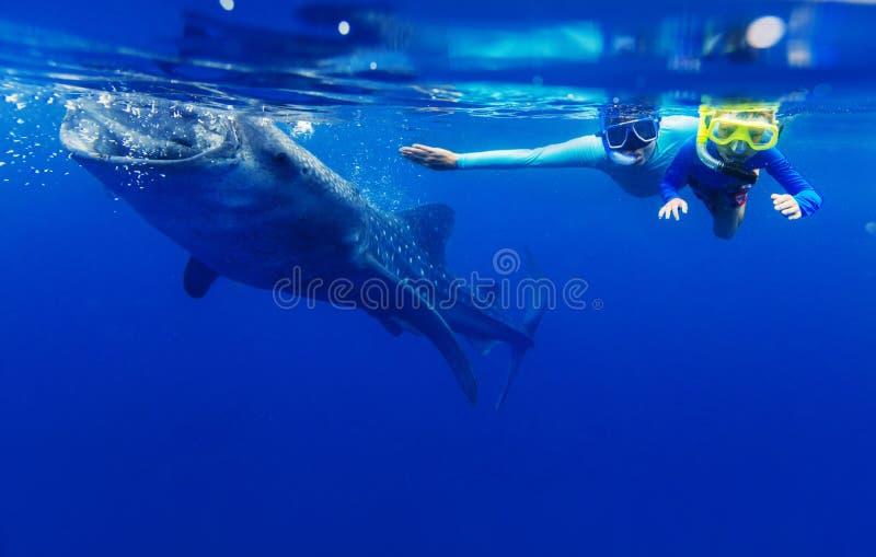 Muchacho que bucea con el tiburón de ballena imágenes de archivo libres de regalías
