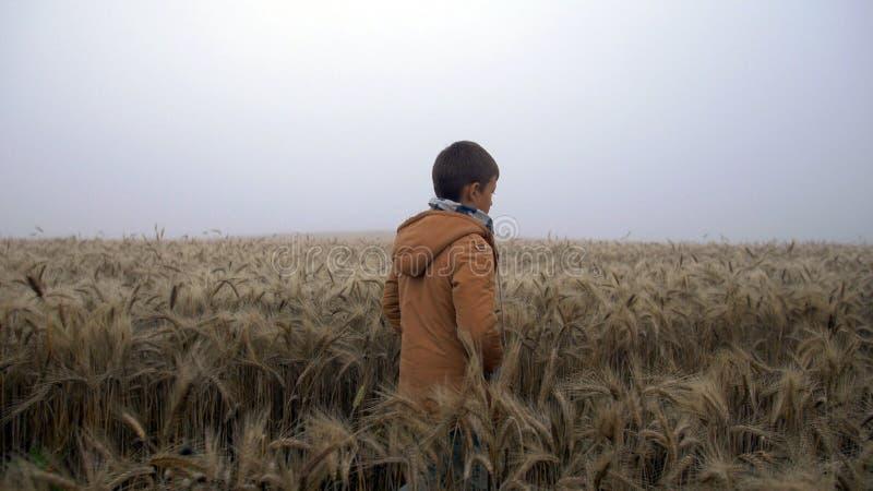 Muchacho que camina en el campo de trigo en la salida del sol, niebla en un campo de trigo fotos de archivo libres de regalías