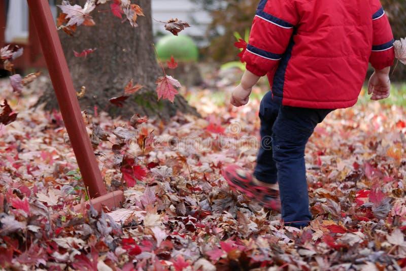 Muchacho que golpea las hojas con el pie rojas en otoño foto de archivo