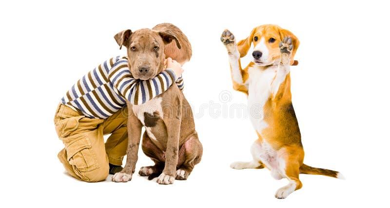 Muchacho que juega con sus perros imagenes de archivo