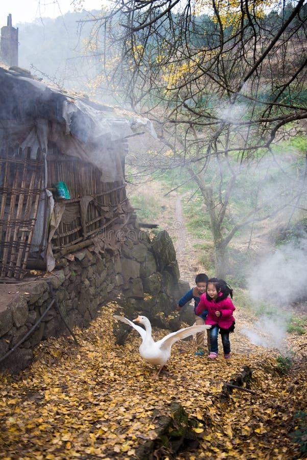 Muchacho y muchacha que juegan con los gansos fotografía de archivo libre de regalías