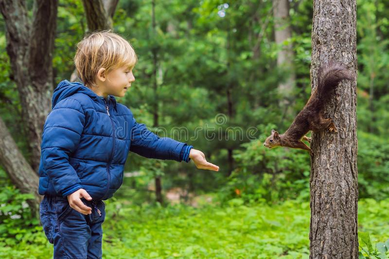 Muchacho y pequeña ardilla en el parque fotografía de archivo libre de regalías