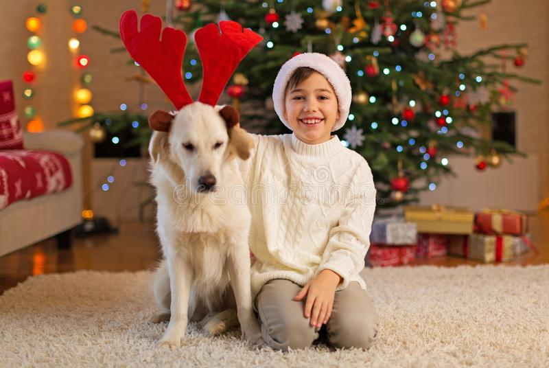Muchacho y perro por el árbol de navidad fotos de archivo libres de regalías