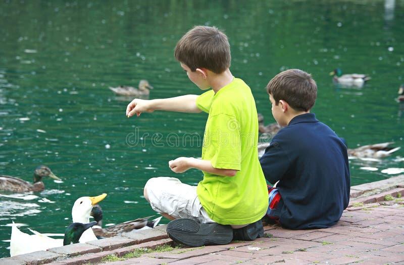 Muchachos que introducen los patos fotografía de archivo libre de regalías