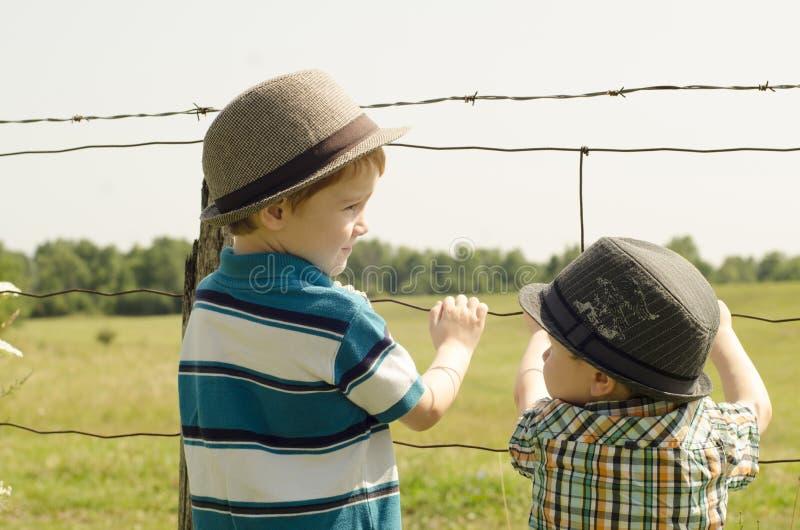 Muchachos que miran vacas en un campo fotografía de archivo