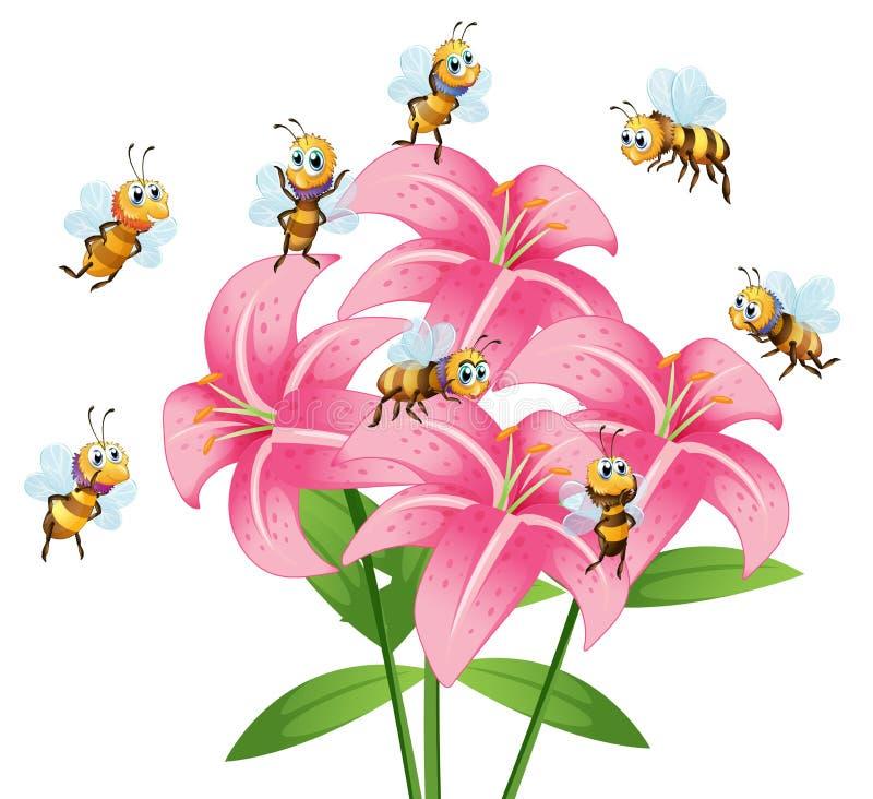 Muchas abejas que vuelan alrededor de la flor del lirio libre illustration