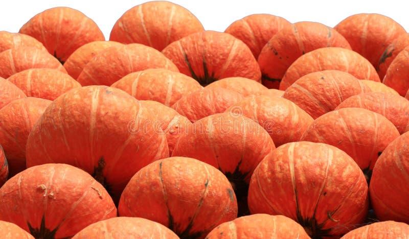 Muchas calabazas anaranjadas fotografía de archivo libre de regalías