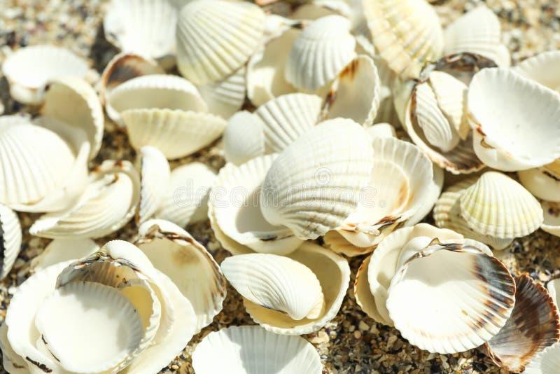 Muchas conchas marinas como fondo, cierre para arriba fotografía de archivo