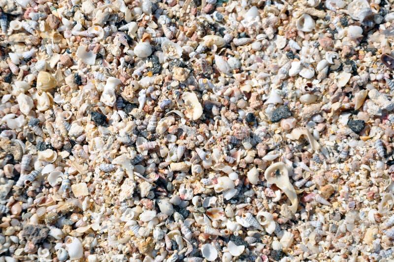 Muchas conchas marinas en la playa foto de archivo