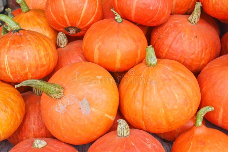 Muchas de las calabazas anaranjadas hermosas alineadas fotos de archivo