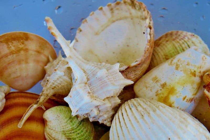 Muchas diversas pequeñas conchas marinas en agua con diversos modelos foto de archivo