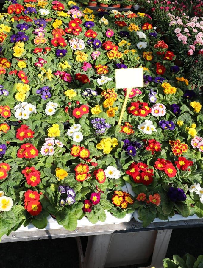 Muchas flores coloridas en un florista imágenes de archivo libres de regalías