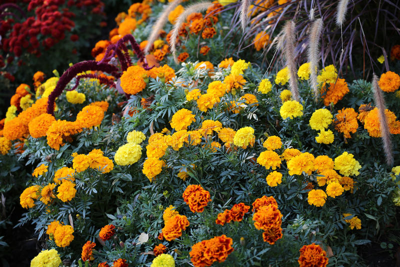Muchas flores con diversos colores en el parque foto de archivo