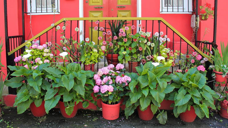 Muchas flores hermosas delante de la puerta fotografía de archivo libre de regalías