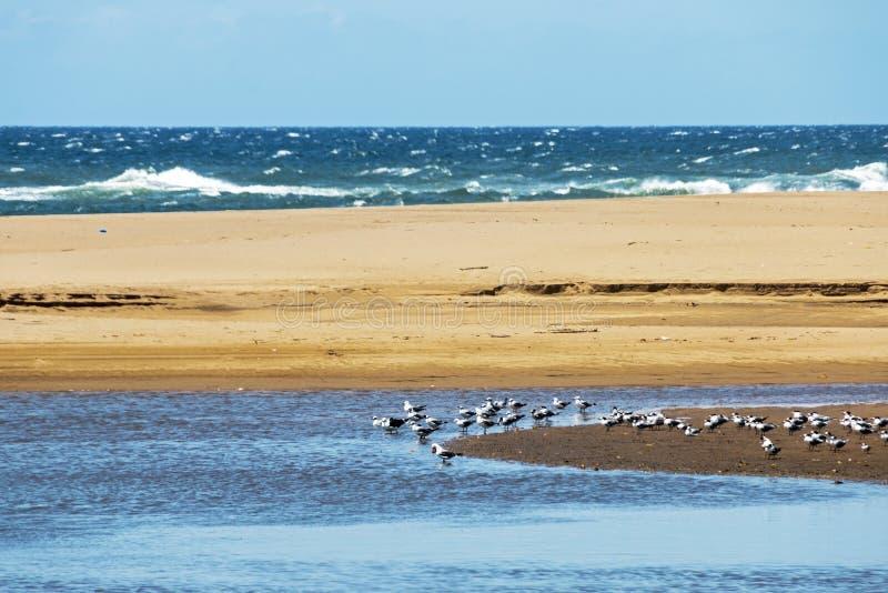 Muchas gaviotas de reclinación en la isla arenosa de la laguna imagen de archivo libre de regalías