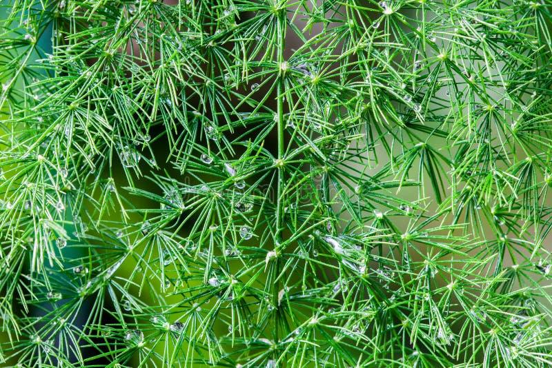 Muchas gotitas de agua en la pequeña hoja verde del árbol de la rama imágenes de archivo libres de regalías
