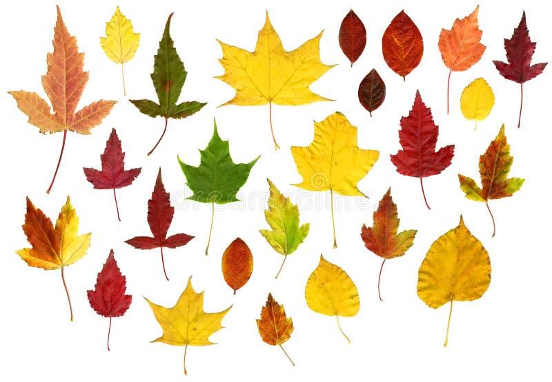 Muchas hojas de otoño coloridas fotografía de archivo