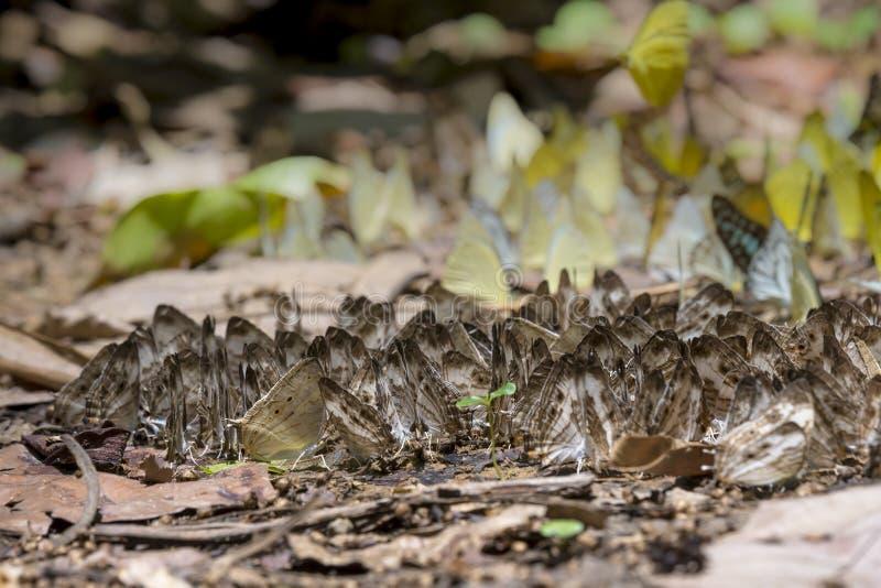 Muchas mariposas fotografía de archivo libre de regalías