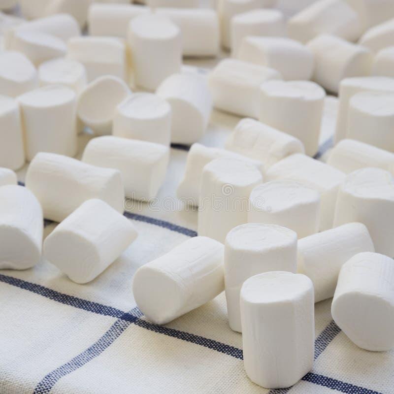 Muchas melcochas blancas en el pa?o, vista lateral primer imágenes de archivo libres de regalías