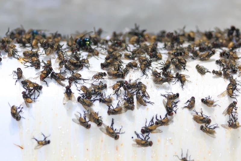 Muchas moscas son trampas del pegamento imagenes de archivo